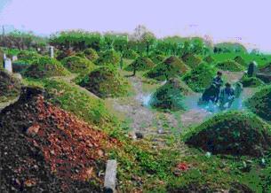 Одно из многочисленных кладбищ, на котором похоронены умершие от СПИДа, заразившиеся во время сдачи крови. Провинция Хэнань. Фото: RFA