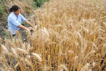 Урожайность в Китае повышается за счёт увеличения количества химических удобрений. Фото: AFP