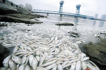 Массовый мор рыбы в реке Хайхэ. Июль 2010 год. Фото с foods1.com