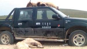 Во время мирной демонстрации фермеров в Южной Монголии были задавлены более 30 животных. Фото: Southern Mongolia Human Rights Information Center