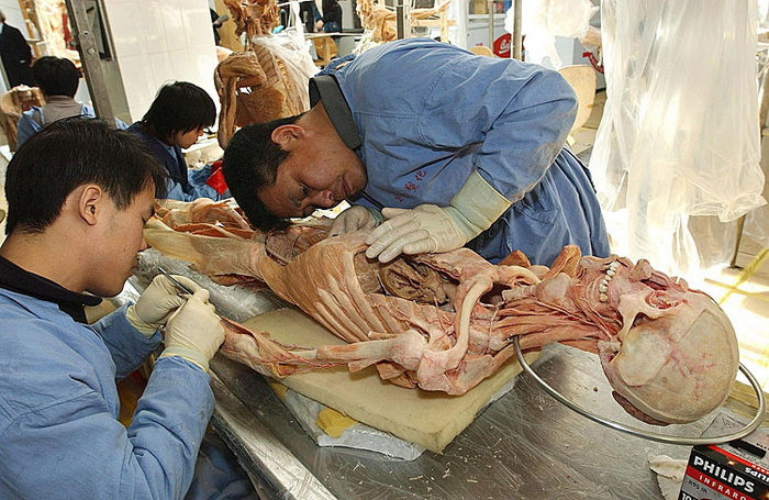 Китайские специалисты обрабатывают человеческое тело на заводе Хагенса по пластинации, город Далянь, 2 февраля 2004 года. Фото: STR/AFP/Getty Images