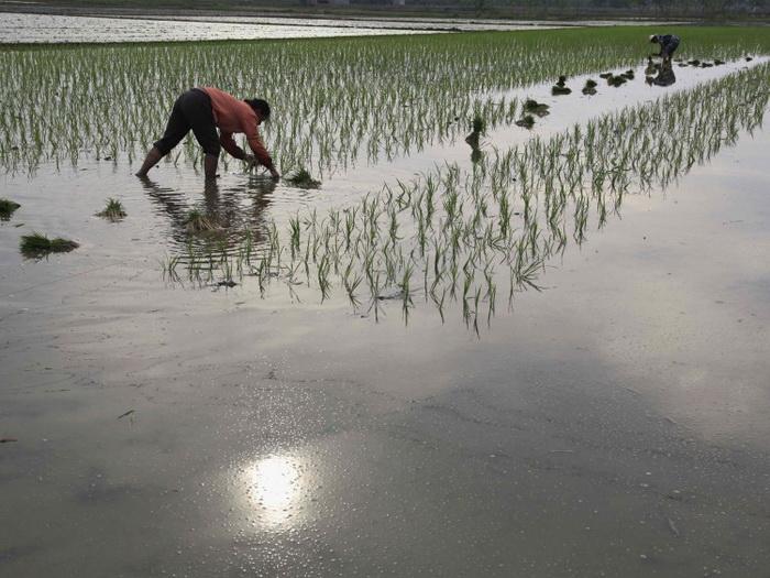 Фермеры в провинции Хубэй высаживают рассаду риса. Министерство трудовых ресурсов и социального обеспечения Китая 5 июня заявило о том, что будет повышать возраст выхода на пенсию с целью накопления пенсионных выплат. Фото: ChinaFotoPress/Getty Images
