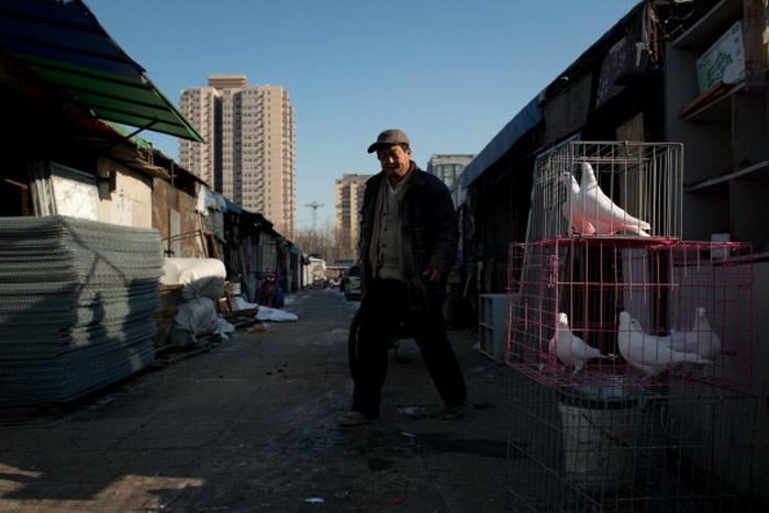На полуразрушенном пекинском рынке по продаже живности. Фото:  Ed Jones/AFP/Getty Images