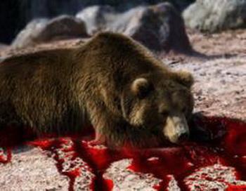 Таможня Благовещенска задержала двух россиян, предположительно  с медвежьей желчью. Фото: ismi.ru