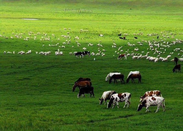 Красивые зелёные пастбища Внутренней Монголии. Фото с epochtimes.com