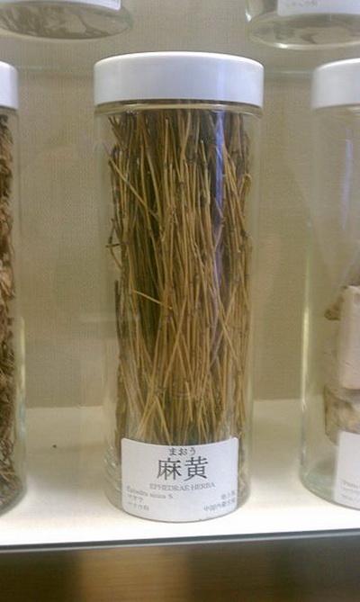 Высушенные стебли эфедры. Фото: Hanabishi/Wikipedia