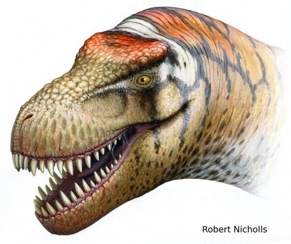 В Китае обнаружен новый вид окаменелости - тираннозавр. Фото:epochtimes/com