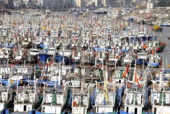 Рыболовецкие лодки в укрытии в Чжоушань  в провинции Чжэцзян в ожидании тайфуна Muifa. Фото: STR / AFP / Getty Images