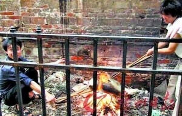 Защитники животных в Китае спасли сотни собак от гибели. Фото:epochtimes.com