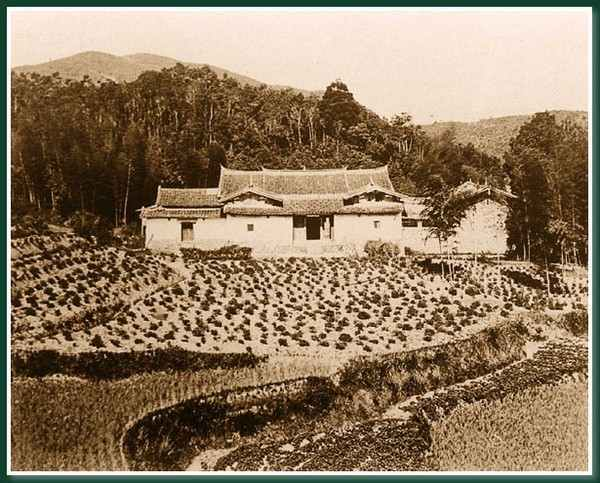 Чайная плантация.Город Фучжоу. 1860 год. Фото: Теодор Джонс