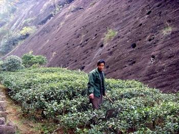 В китайских чаях обнаружено около 30 видов пестицидов. Фото: The Epoch Times