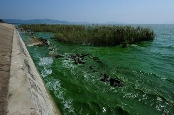 Пять самых крупных пресных озёр в Китае загрязнены. Озеро Тайху. Фото: MARK RALSTON/AFP