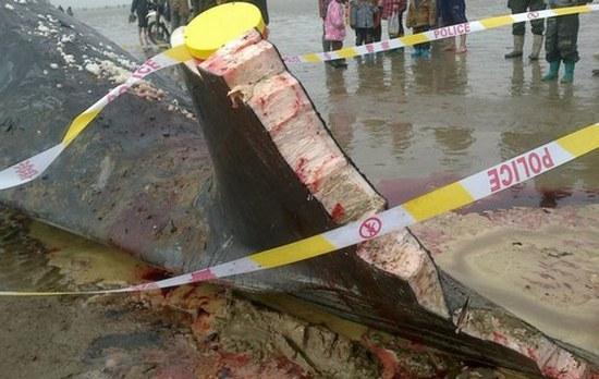 На берег Жёлтого моря выбросились четыре кашалота. Фото с ce.cn