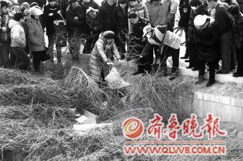 Местные жители вместе с полицией собирают мёртвых младенцев, выброшенных на обочину дороги. Провинция Шаньдун. Февраль 2012 год. Фото: sjb.qlwb.com.cn