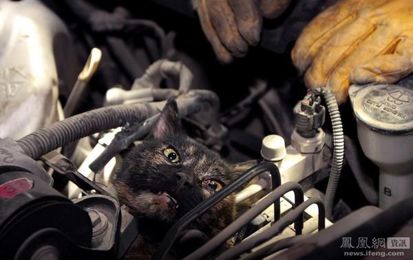 Кот застрял в двигателе автомобиля. Его лапы попали под ремень двигателя. Город Хуабэй провинции Аньхой. 19 декабря 2011 год. Фото: Чао Жан