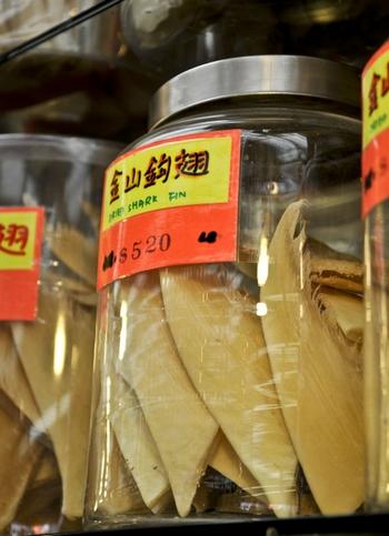 Акульи плавники в Китае тоже могут быть фальшивыми. Фото: Anil Sharma