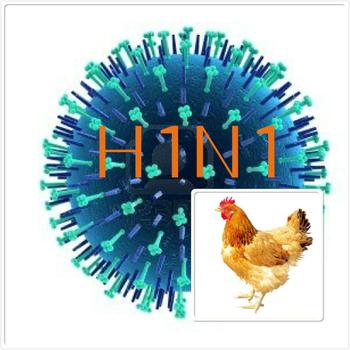 В Китае зафиксирована вспышка свиного гриппа H1N1