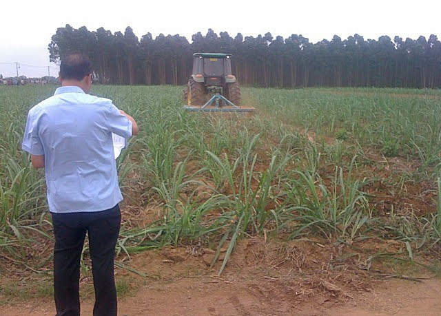 Трактор уничтожает посевы. Деревня Улянцзян. Апрель 2013 год. Фото с molihua.org