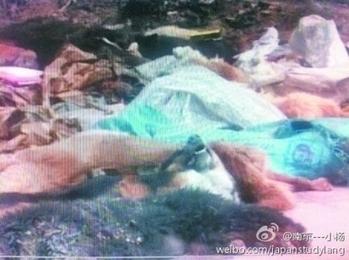 В китайской деревне внезапно начался мор животных и птиц. Фото с epochtimes.com