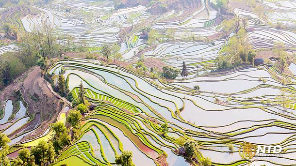 Террасные поля. Провинция Юньнань. Фото: NTD