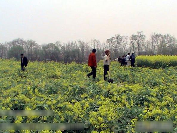 Многие местные крестьяне потеряли свои поля из-за постройки здания администрации. Фото с сайта kanzhongguo.com