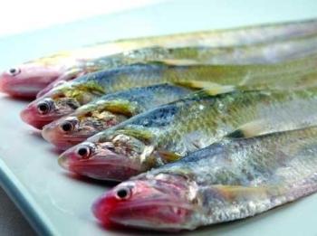 Рыба псефур на грани исчезновения в Янцзы. Фото: epochtimes.com