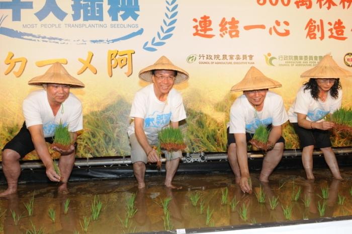 Тайвань хочет попасть в Книгу рекордов Гиннеса по посадке риса. Фото: Центральное информационное агентство (Тайвань).