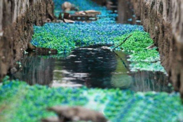 В Чжэнчжоу провинции Хэнань появилась река «радуга» из полых разноцветных желатиновых капсул. Фото: kanzhongguo.com