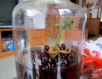 В Китае цветут заспиртованные корни женьшеня. Фото с epochtimes.com