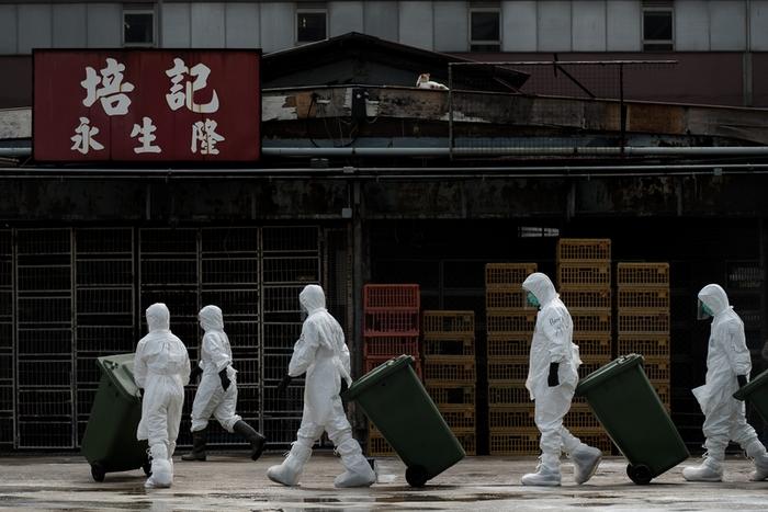 В Гонконге уничтожают партию живых птиц из континентального Китая, которые оказались заражены птичьим гриппом. Январь 2014 года. Фото: PHILIPPE LOPEZ/AFP/Getty Images