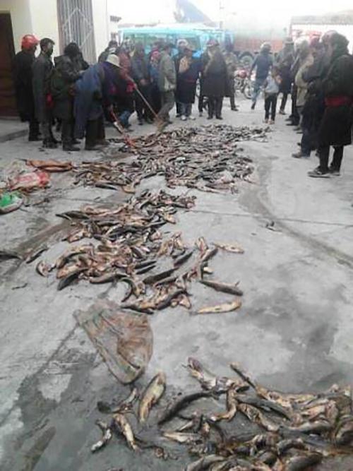 Крестьяне привезли умершую от загрязнения рыбу к зданию администрации с требованием к чиновникам прекратить уничтожать экологию. Уезд Кандин провинции Сычуань. Октябрь 2013 год. Фото: «Свободная Азия»
