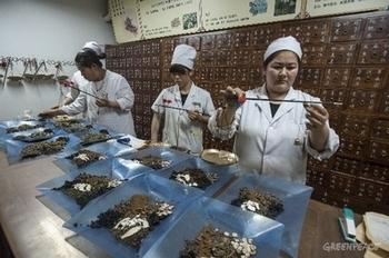 Сотрудники организации «Гринпис» проверяют качество лекарственных трав китайской традиционной медицины. Фото: Greenpeace