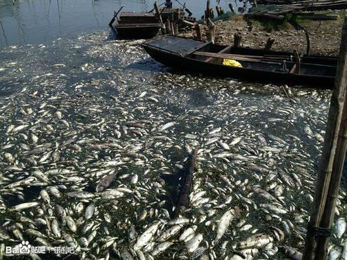 В результате первого этапа проекта поворота рек в Китае, погибла вся рыба в озере Дунпин. Деревня Гулун провинции Шаньдун. Июнь 2013 года. Фото с epochtimes.com