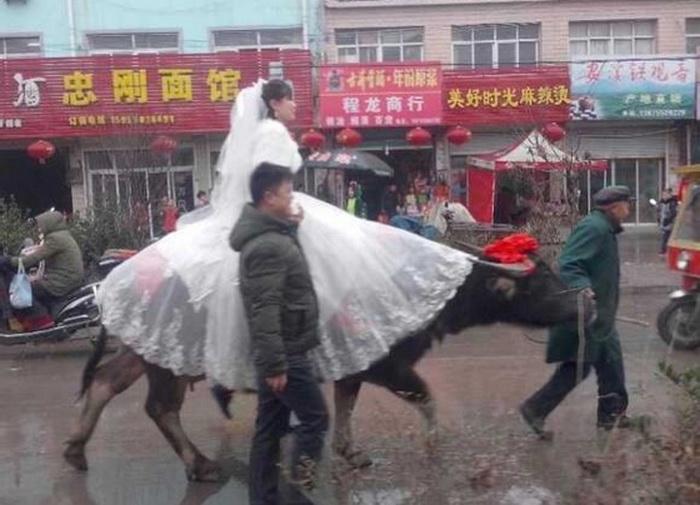 Невеста в Восточном Китае едет на свадьбу на индийском буйволе, рядом её жених, которого вдохновила древняя легенда. Скриншот: Baidu.com