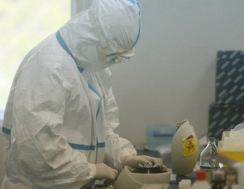 Лабораторные исследования показали, что цыплята погибли от вируса H5N1. Фото: STR/AFP/Getty Images
