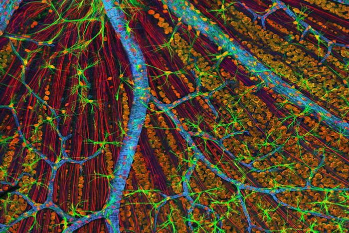 Фото: Национальный центр микроскопии и исследования изображений