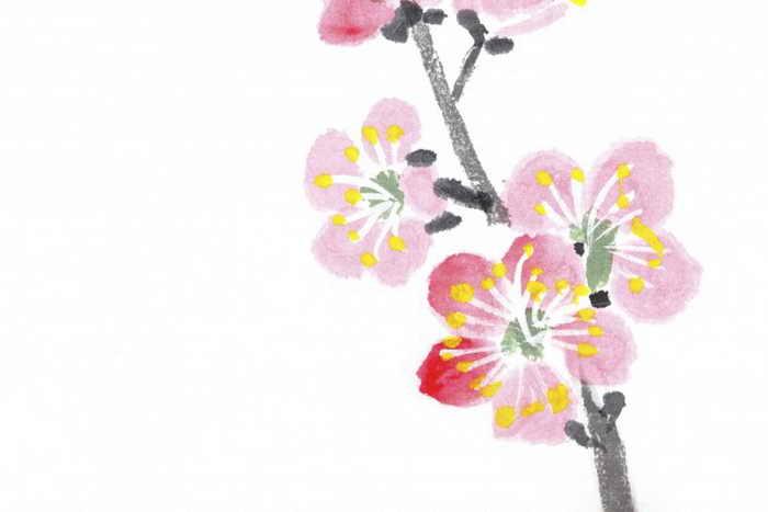 На картине изображены изящные цветы сливы на ветке. Одно слово, которое искусный поэт изменил в стихотворении о цветах ранней сливы, стало блестящим последним штрихом и полностью изменило сочинение. Фото: RyanKing999/Photos.com