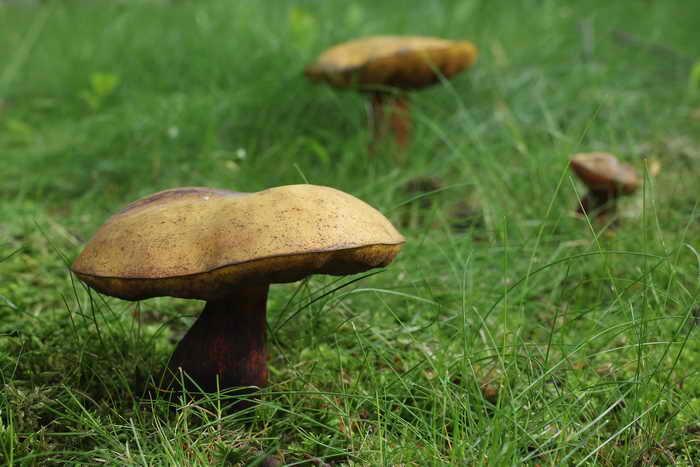 Американские учёные из школы медицины Бостонского университета выяснили, что грибы укрепляют иммунную систему человека благодаря большому количеству витамина D. Фото: Sean Gallup/Getty Images