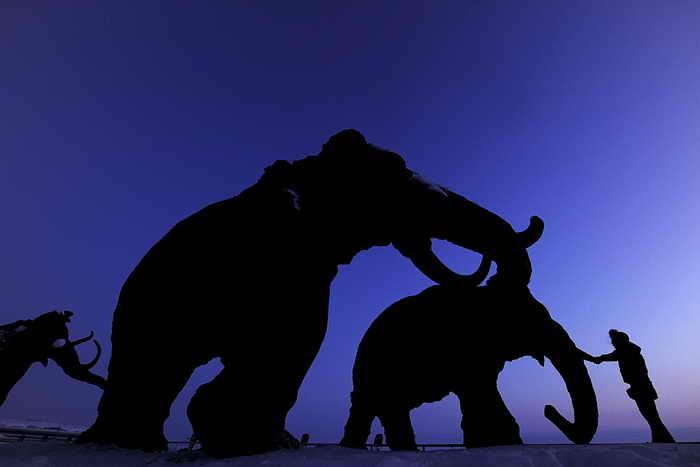 Учёные хотят возродить мамонтов и заселить ими Сибирь. Фото: NATALIA KOLESNIKOVA/AFP/GettyImages