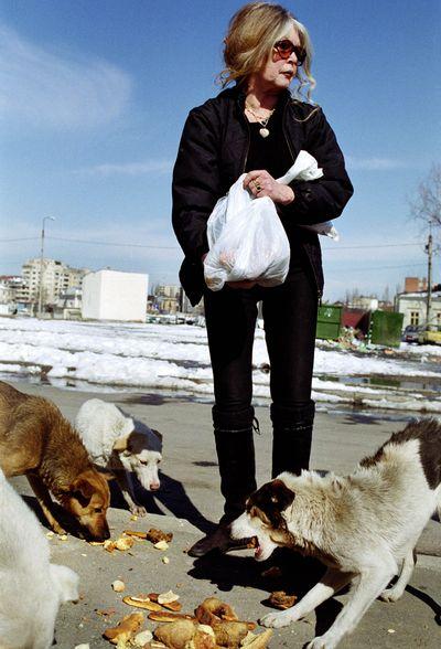 Две жизни Брижит Бардо. Брижит Бардо кормит бродячих псов. Фото: Kael Alford/Newsmakers
