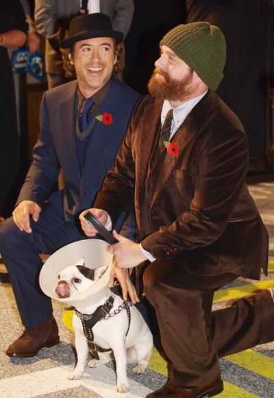 Роберт Дауни мл. и Зак Галифианакис на премьере фильма «Впритык». 2010 год. Фото: MAX NASH/AFP/Getty Images