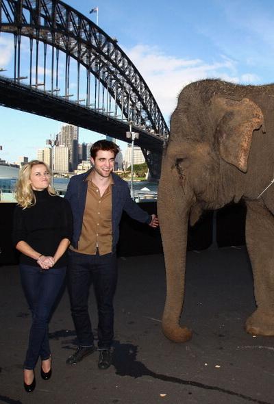«Воды слонам». Роберт Паттинсон, Риз Уизерспун и Рози на фотосессии фильма «Воды слонам» в Сиднее, Австралия. Фото: Ryan Pierse/Getty Images