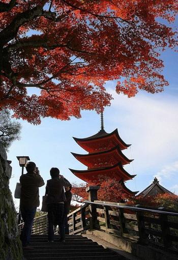 Туристы фотографируют пятиэтажную пагоду, около 27,6 метров высотой, скрытую за яркими листьями клёна в Ицукусиме, Миядзима, префектура Хиросима. Пагода, как считается, была построена в 1407 году. Фото: Kazuhiro Nogi/AFP/Getty Images