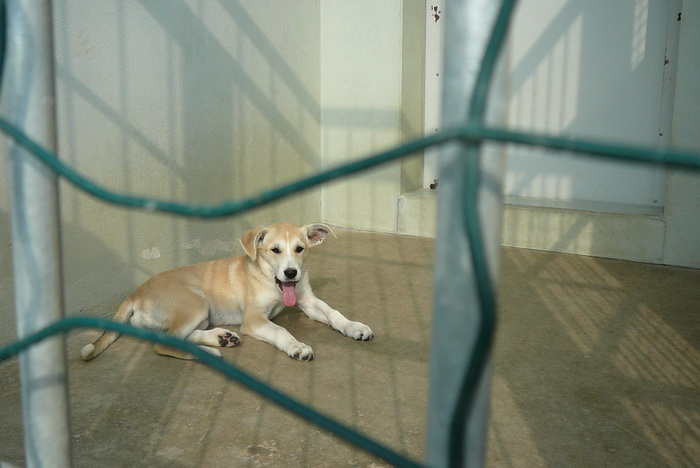 Приют для животных Labas majas. Фото: Великая Эпоха