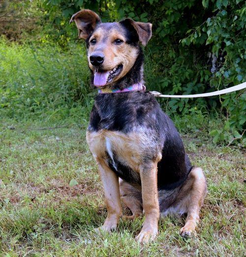 Приют для животных Labas majas. Пёс Жоржик теперь живёт в приюте. Фото предоставлено сотрудниками приюта Labas majas