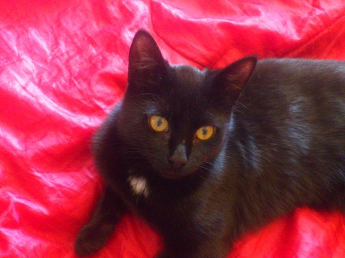 Приют для животных Labas majas. Кошка Минна в новом доме уже выросла большой. Фото предоставлено сотрудниками приюта Labas majas