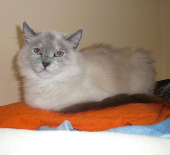 Приют для животных Labas majas. Кошка Улрика. Фото: Великая Эпоха