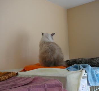 Приют для животных Labas majas. Вот так теперь Улрика реагирует на внимание со стороны людей. Фото: Великая Эпоха