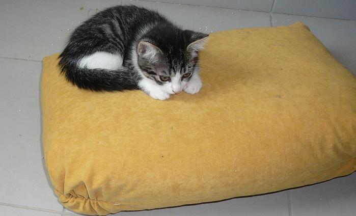 Приют для животных Labas majas. В комнате котят. Фото: Великая Эпоха