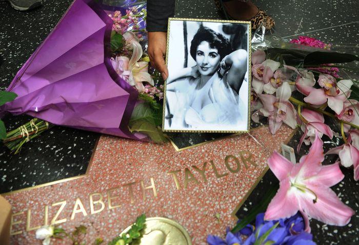 Звезда Элизабет Тейлор на Алее славы в Голливуде. Фото: MARK RALSTON/AFP/Getty Images